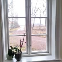 fönster i kärnfuru målade med linoljefärg foder